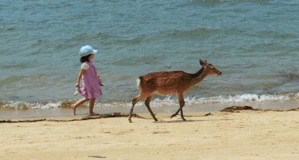 Picture of a young girl walking on the beach behind a deer on Miyajima Island