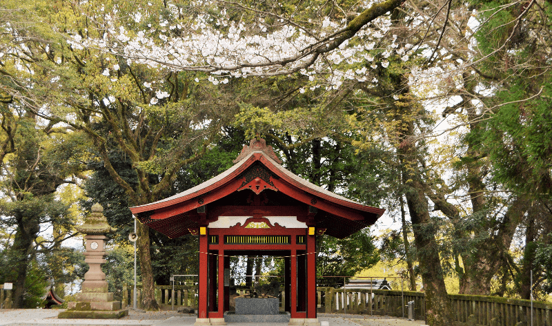 Picture of a small shrine in Japan surrounded by cherry blossom trees